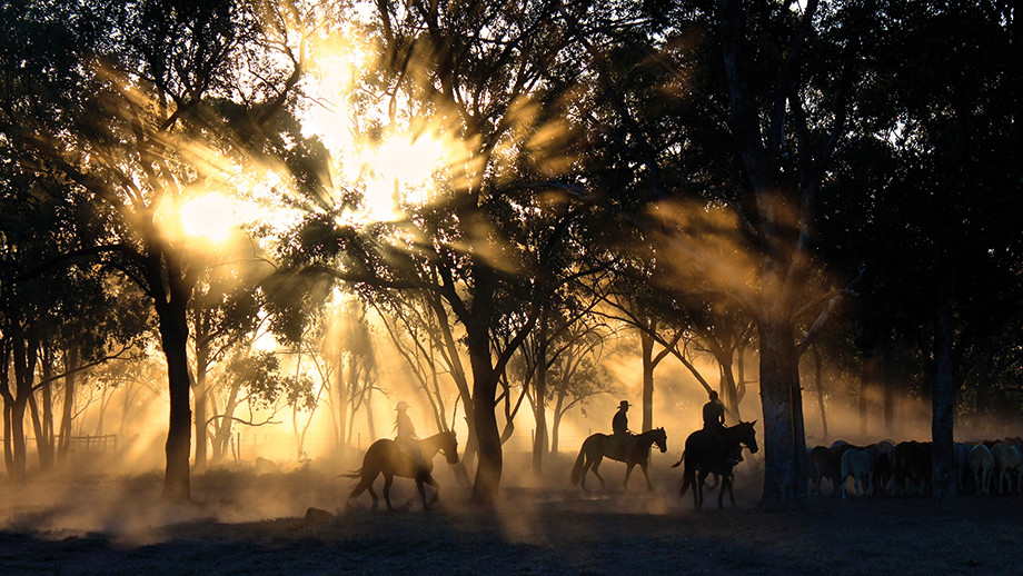 Farmers riding through the woods at sunset