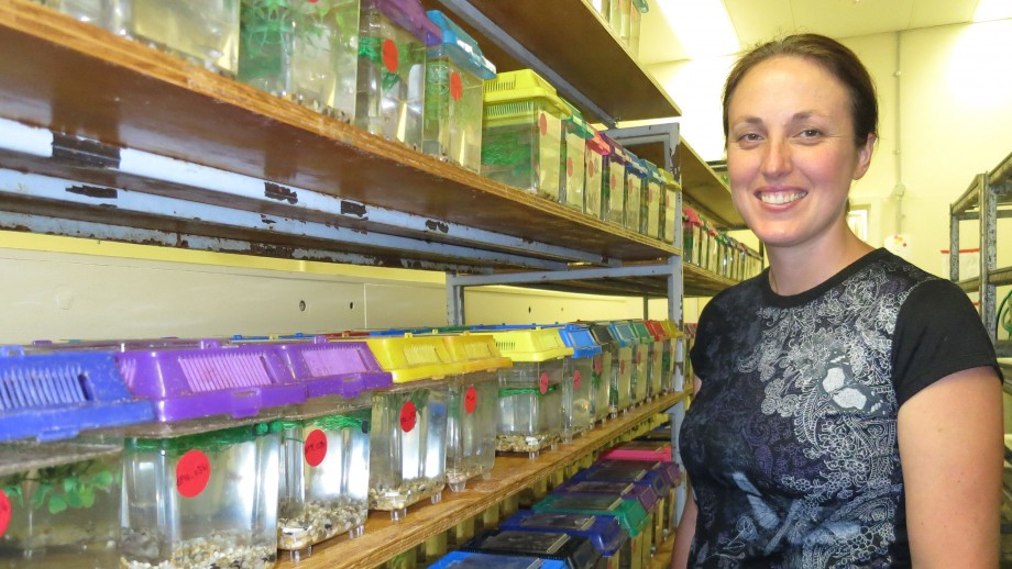 Dr Megan Head in her evolutionary biology lab at the Research School of Biology. Image, Regina Vega-Trejo